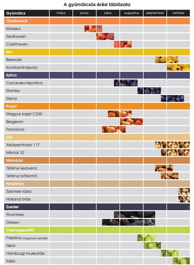 érési táblázat