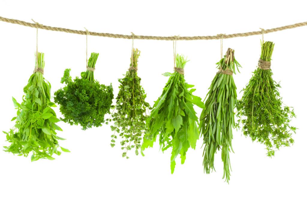 fűszernövény