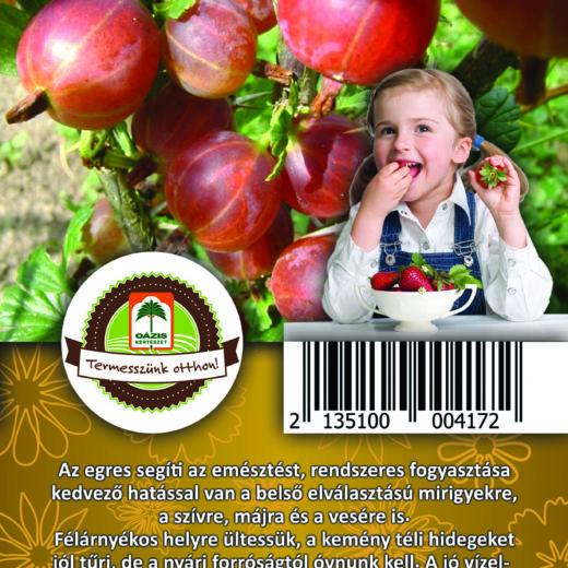 "Oázis Egres - Ribes uva crispa ""Hinnomaki rot"""