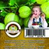 "Oázis Egres - Ribes uva crispa ""Invicta"""
