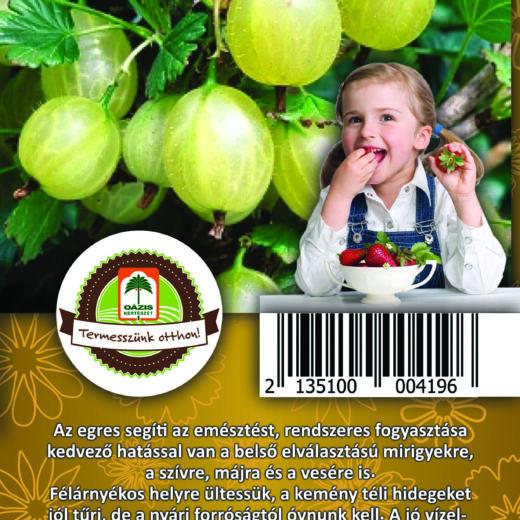 """Oázis Egres - Ribes uva crispa """"Mucurines"""""""