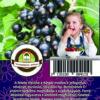 """Oázis Feketeribiszke - Ribes nigrum """"Ben sarek"""""""