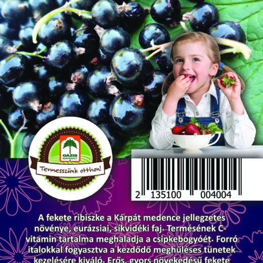 "Oázis Feketeribiszke - Ribes nigrum ""Silvergieters"""
