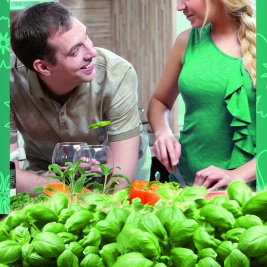 Oázis Fűszernövény Mix (6-os tálcán)