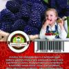 "Oázis Málna - Ribes idaeus ""Black Jewel"""
