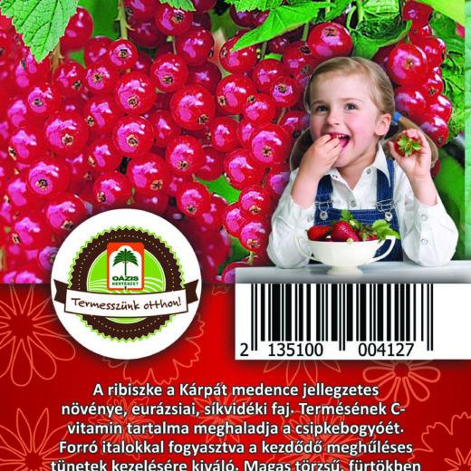 "Oázis Feketeribiszke - Ribes nigrum ""Rovada"""