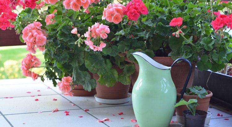 növénygondozás nyáron