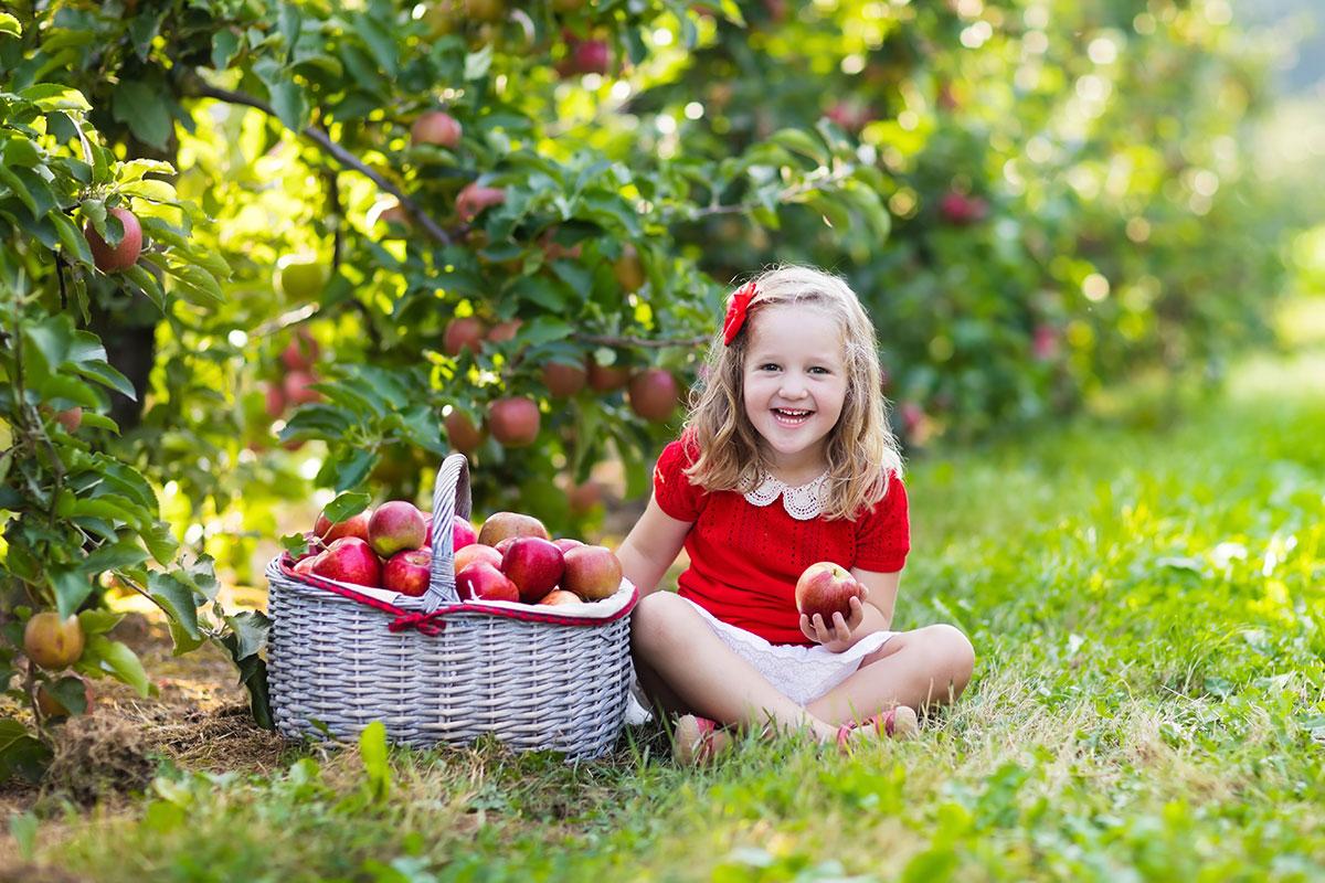 A konténeres gyümölcsfák előnyei - Oázis Kertészet