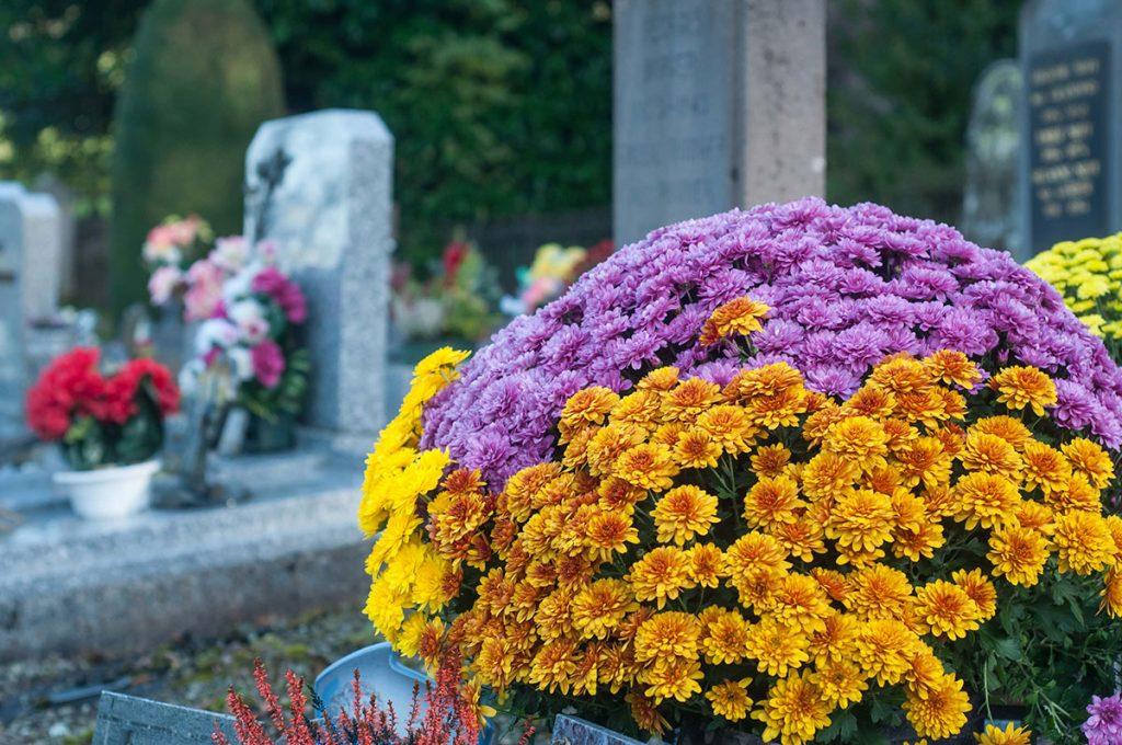 halottak napja virágok temetőbe (2)