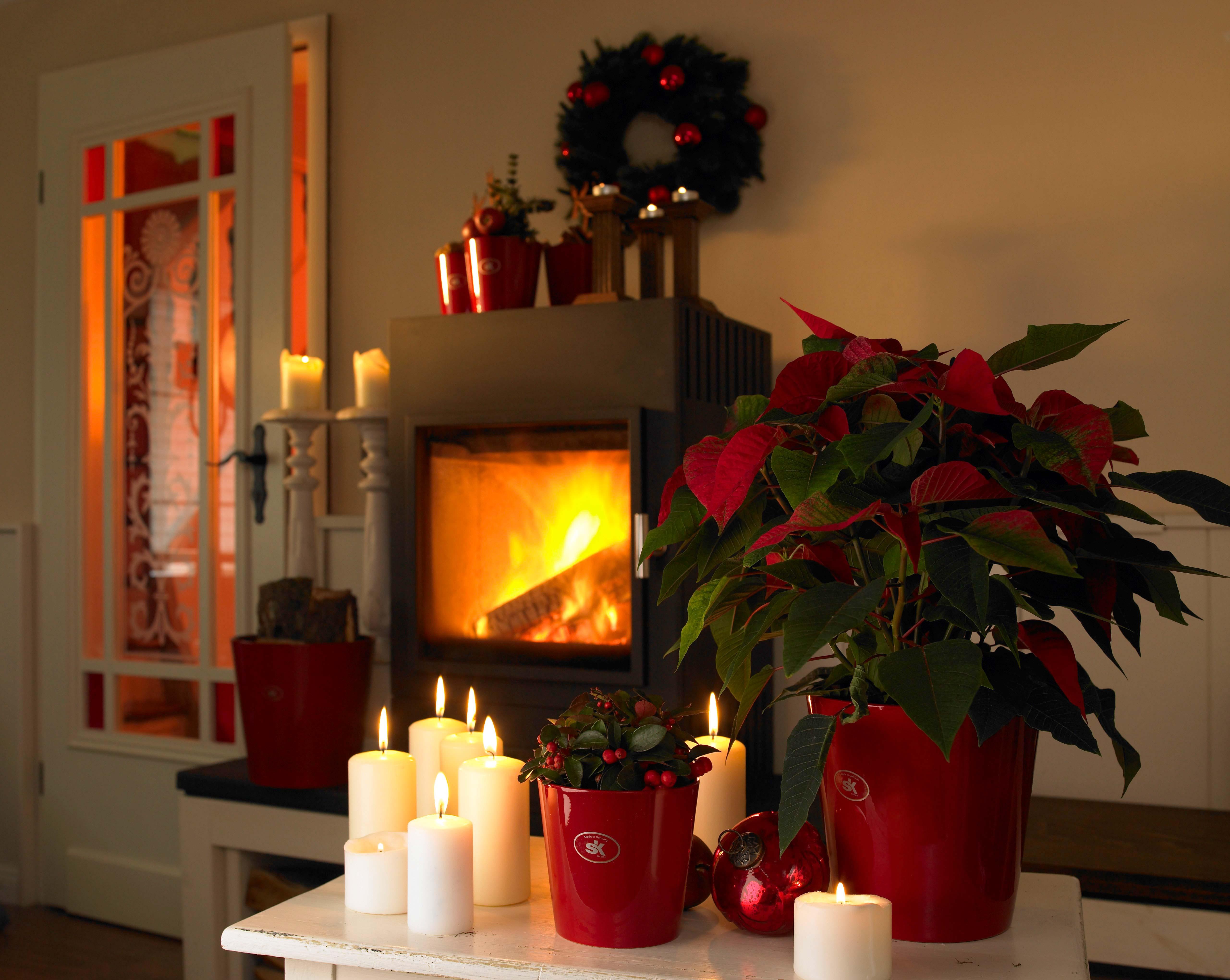 Kis lakások karácsonya - Oázis Kertészet